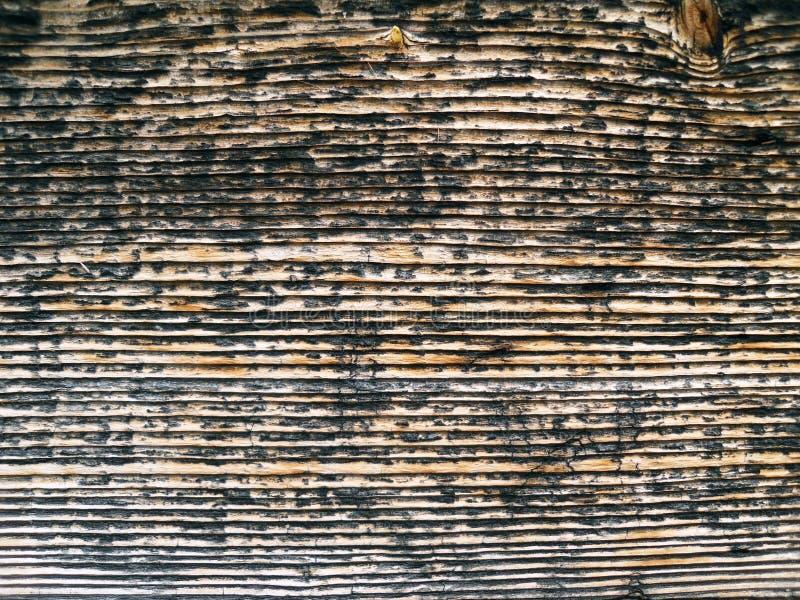 Tekstura bambusa kosz zdjęcie royalty free