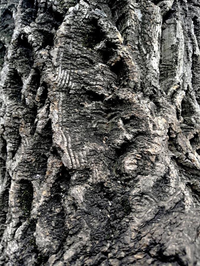 Tekstura barkentyna drzewo pękający obraz royalty free