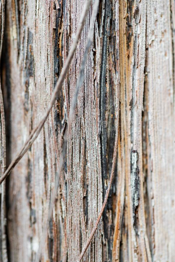 Tekstura barkentyna w górę winogron i bagażnik obraz stock