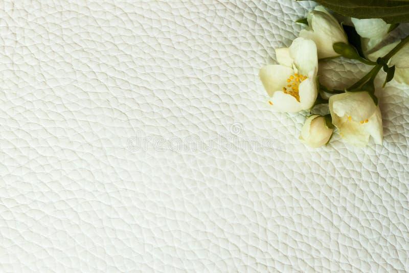 Tekstura biały prawdziwej skóry zakończenie, dekorująca z jaśminowym kwiatem Dla tła, tło, substrat obraz stock