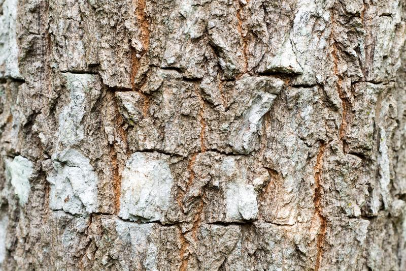 Tekstura brown barkentyna drzewo obrazy stock