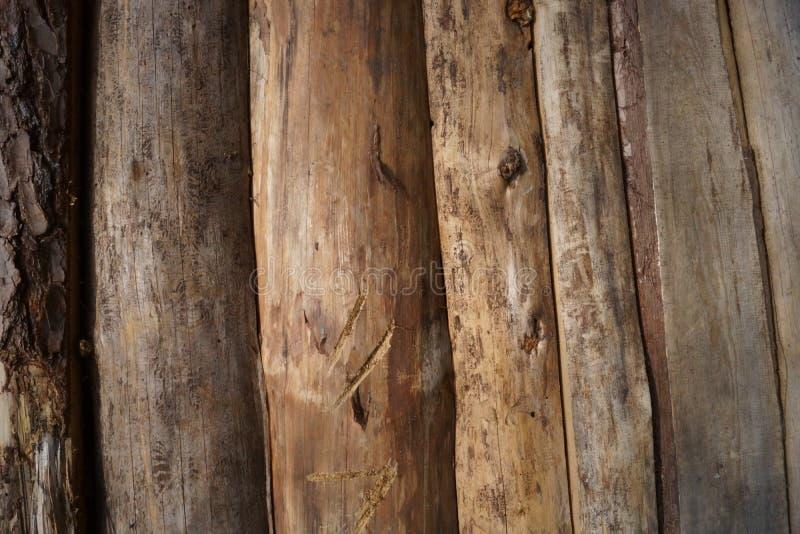 Tekstura drevesiny imagem de stock