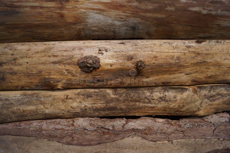 Tekstura drevesiny fotos de stock royalty free