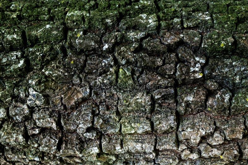 Tekstura drewniany use jak naturalny Abstrakcjonistyczny tło, pusty tem obrazy stock