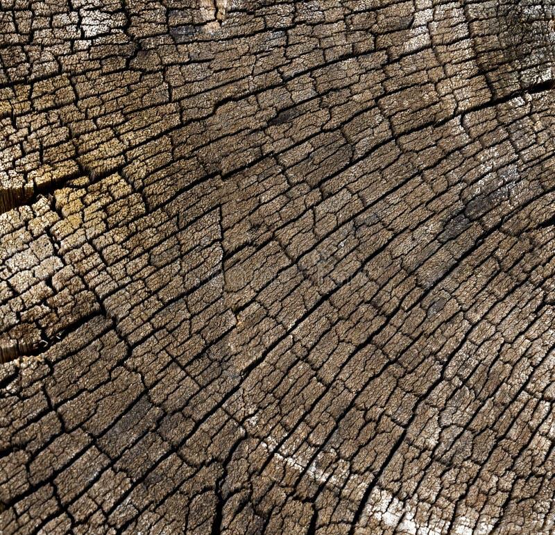 Tekstura drewniany use jak naturalny Abstrakcjonistyczny tło, pusty tem fotografia stock