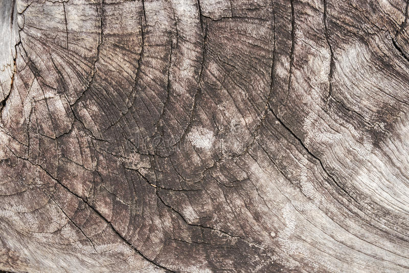 Tekstura drewniany use jako naturalny tło zdjęcie royalty free