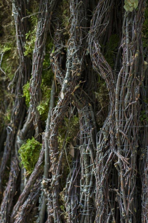 Tekstura drzewna barkentyna z pazami i pazami zdjęcie stock