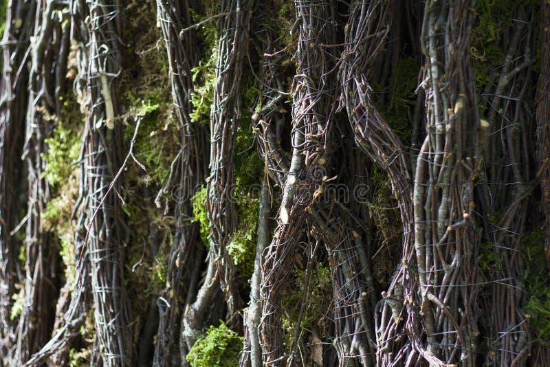 Tekstura drzewna barkentyna z pazami i pazami zdjęcie royalty free