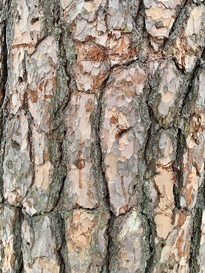 Tekstura drzewna barkentyna zielony mech, troszkę zdjęcia stock
