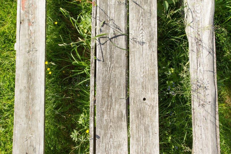 Tekstura drzewo na trawie zdjęcia royalty free