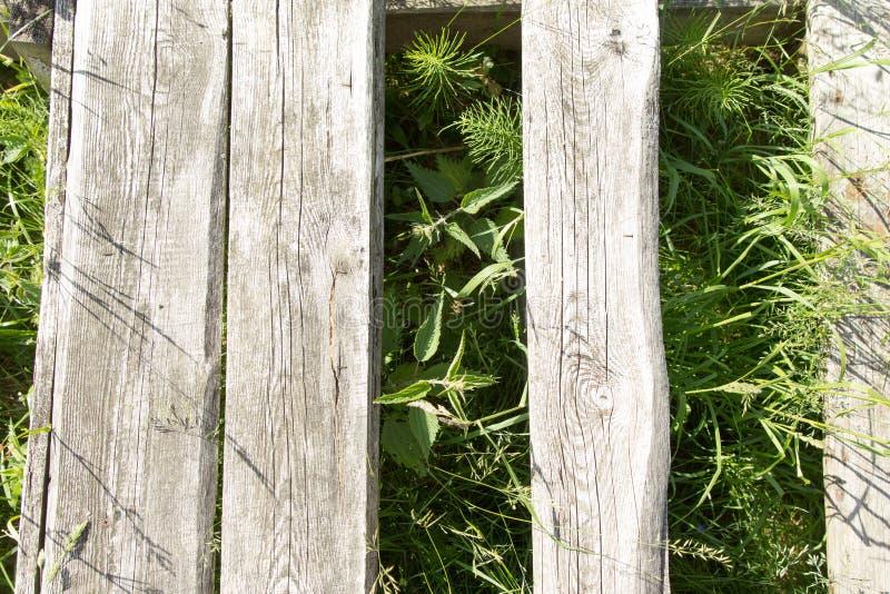 Tekstura drzewo na trawie fotografia stock