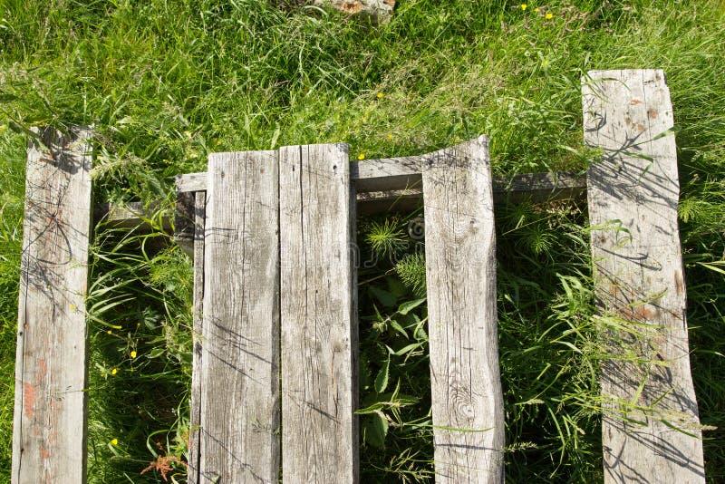 Tekstura drzewo na trawie zdjęcia stock