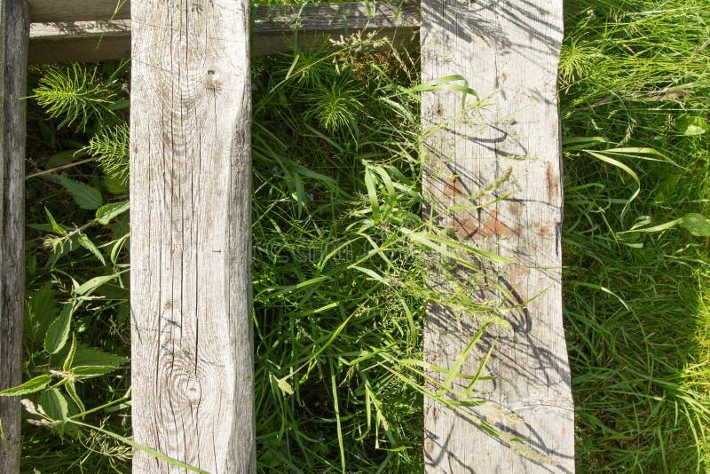 Tekstura drzewo na trawie obraz royalty free