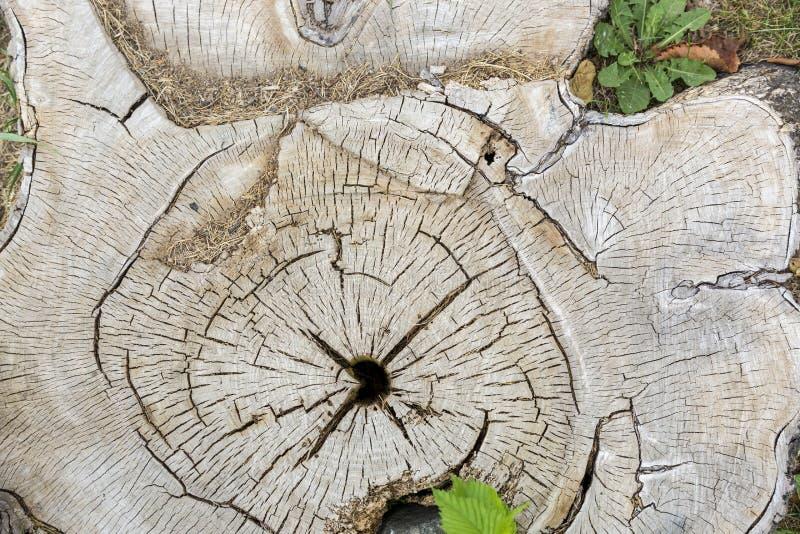 Tekstura i tło, cięcie drewniany fiszorek obraz royalty free