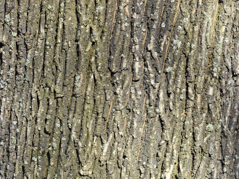 Tekstura i tło stara dąb barkentyna fotografia stock