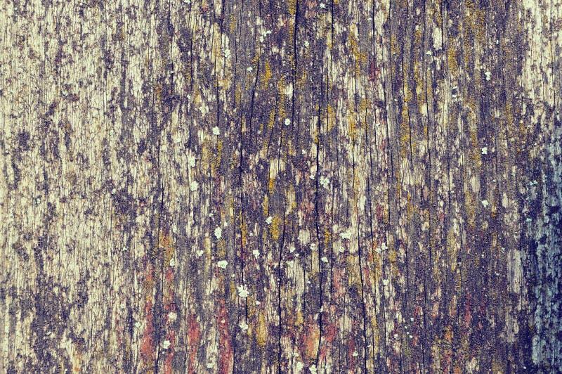 Tekstura jest bardzo starym drewnem Stara deska z pęknięciami Zakończenie obrazy royalty free