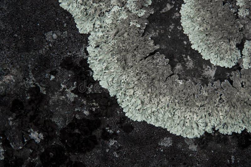 Tekstura kamień z szarym liszajem obrazy royalty free