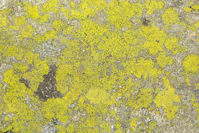 Tekstura kamienny liszaj, tło fotografia stock