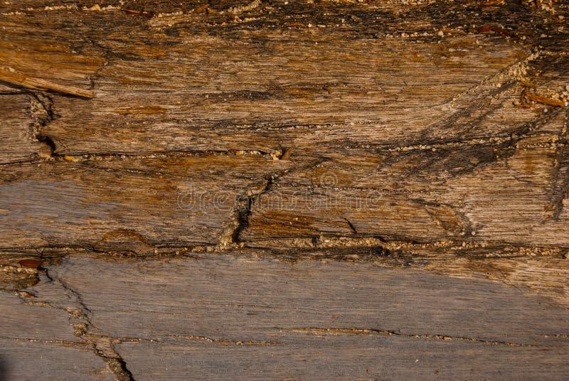 Tekstura korowaty drewniany use jako naturalny tło fotografia stock