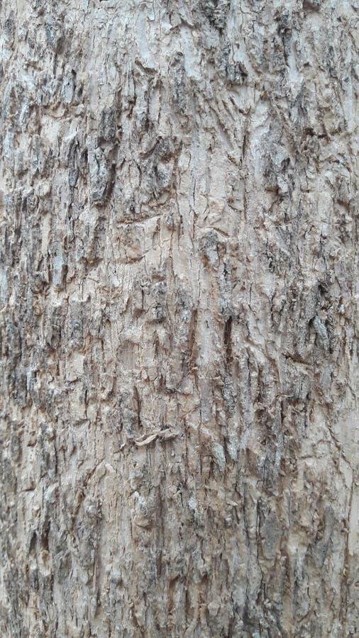 tekstura kory drzewnej fotografia royalty free