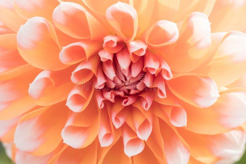 Tekstura kwiatu zakończenia piękny szczegół obraz stock
