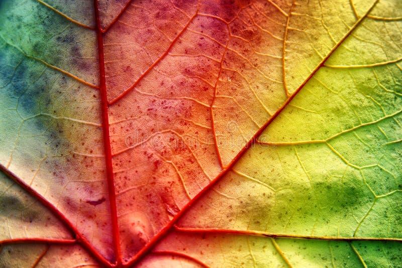 tekstura liść tekstura obrazy stock
