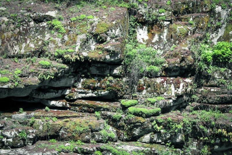 Tekstura mechata skała obrazy stock