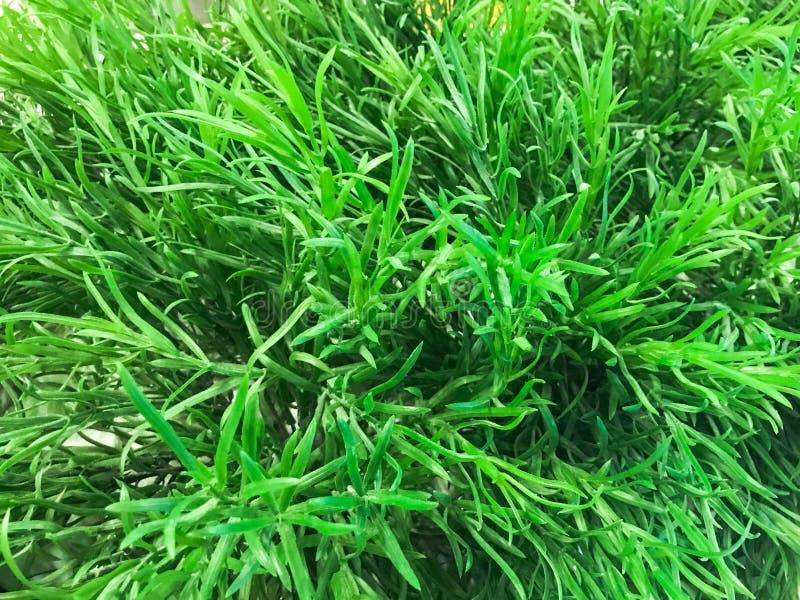 Tekstura naturalni zieleni ściągli piękni liście mały świeży verdure pozyskiwania środowisk gentile zdjęcia royalty free