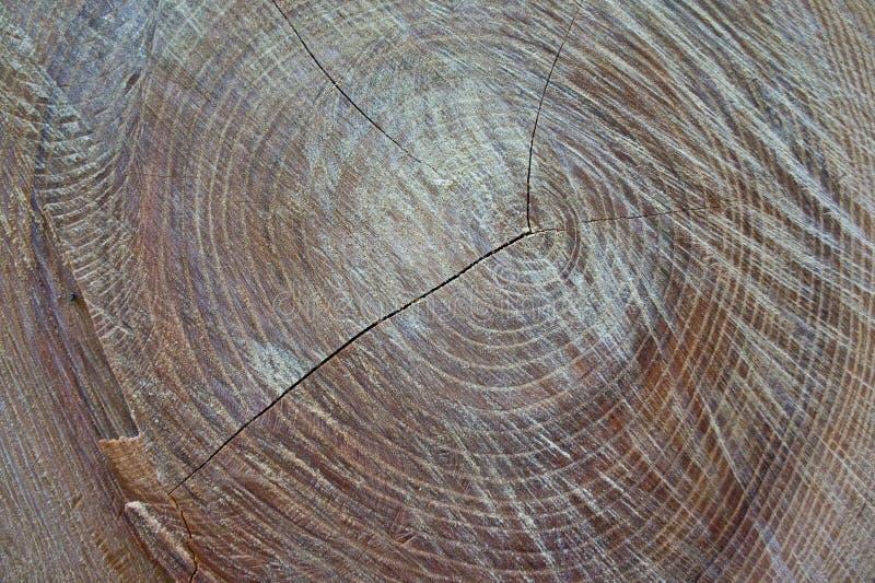 Tekstura ostatnio obrany stary drzewo strzelał zakończenie zdjęcie stock