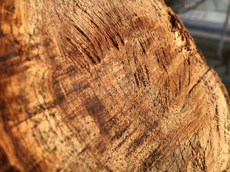 Tekstura piłujący konopie na zielonym drzewie obraz royalty free