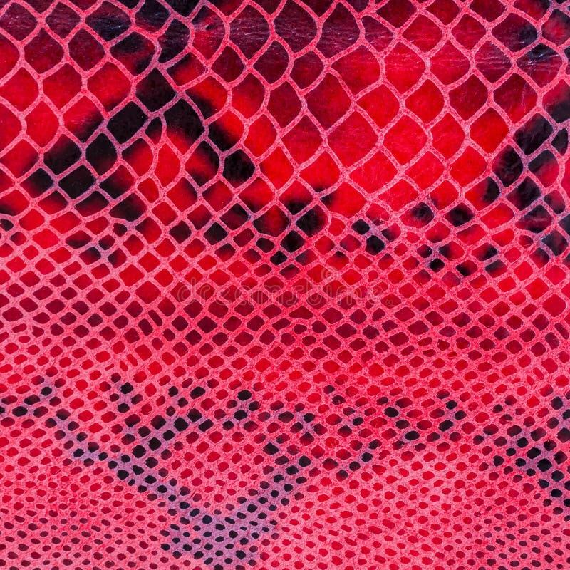 Tekstura prawdziwej skóry zakończenie, embossed pod skórą gada, chwytliwy jaskrawy wzór kwadrat zdjęcia royalty free