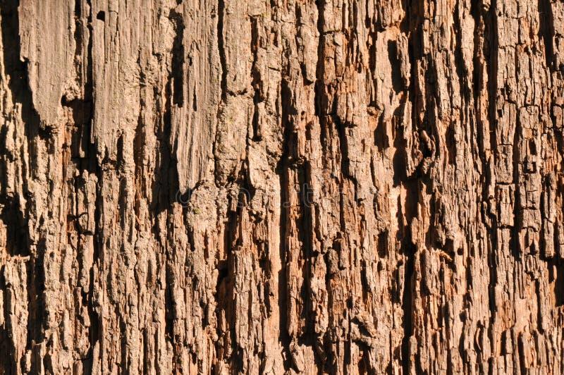 Tekstura przegniły korowaty drewno obraz stock