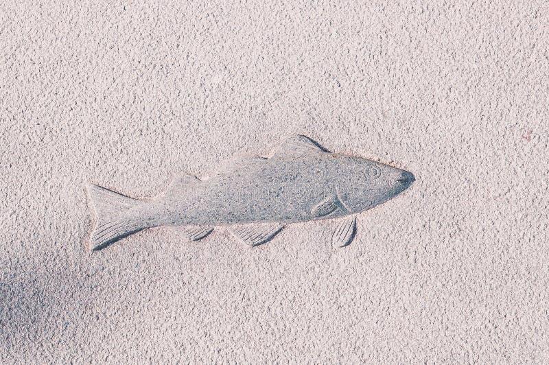 Tekstura rysunku ryba na betonowej ścianie obraz royalty free