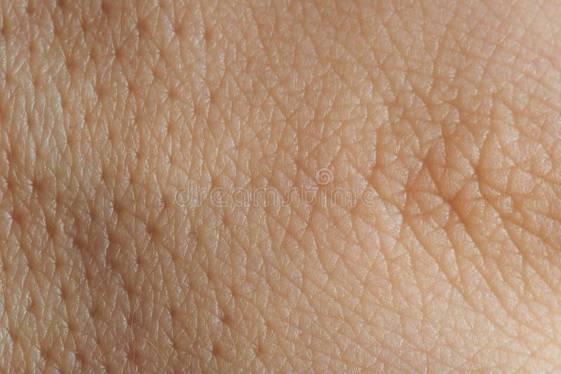 Tekstura skóra z pores zdjęcie royalty free