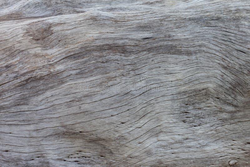 Tekstura stary bagażnika drzewo dla tła zdjęcia stock