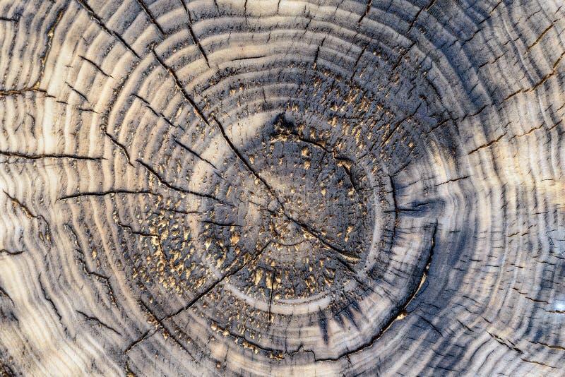 Tekstura stary drewna cięcie z pęknięciami fotografia stock