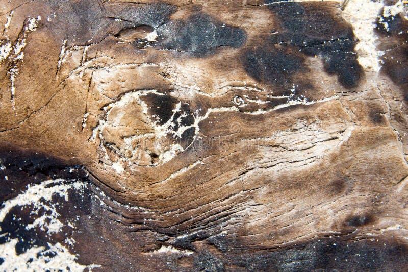 Tekstura suchy stary drewno palił ogieniem, słońce suszący lying on the beach na piaskowatym seashore zdjęcia royalty free