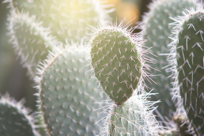 Tekstura Teksas kaktus zdjęcie royalty free