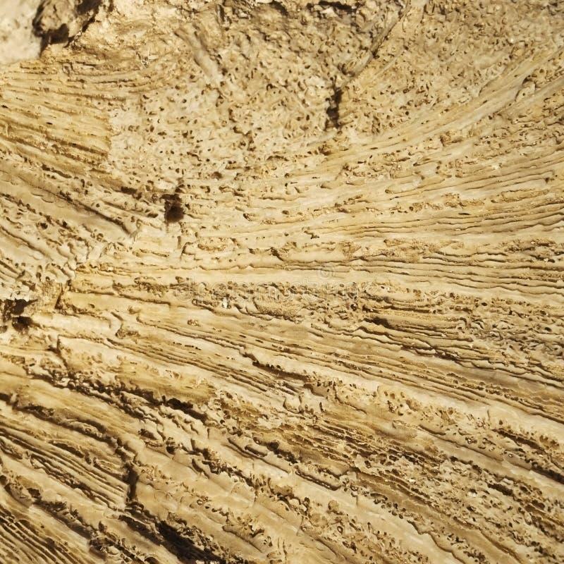 Tekstura tworzył koralami w nabrzeżnym wapniu obraz stock