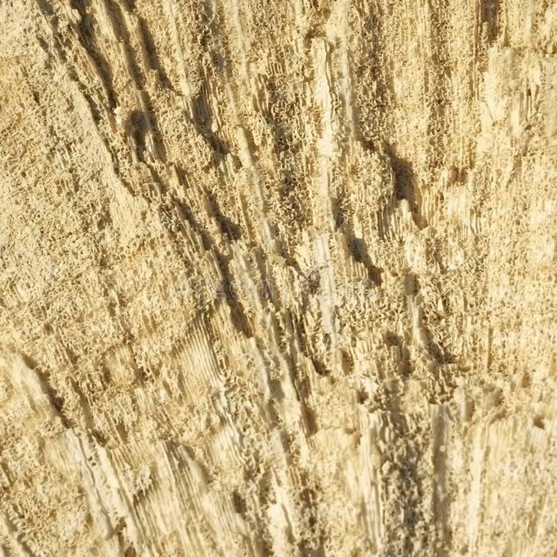 Tekstura tworzył koralami w nabrzeżnym wapniu obrazy stock