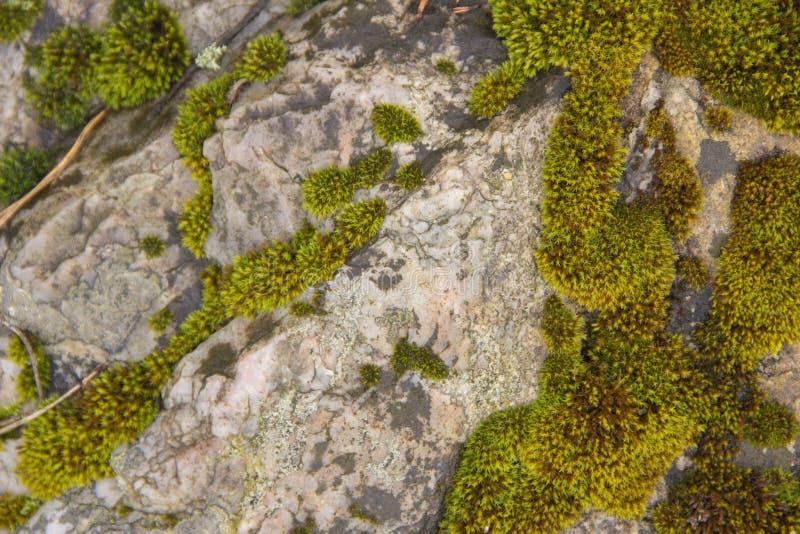 Tekstura wielki las kamień z mech zdjęcia stock