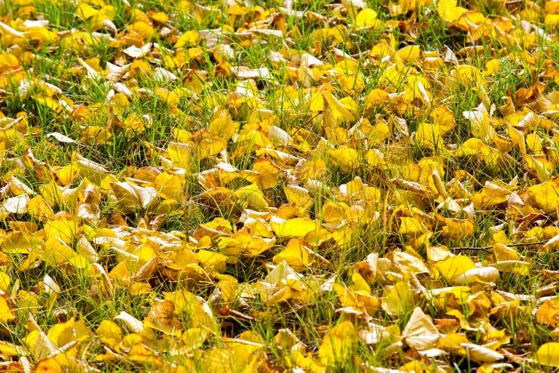 Tekstura, wzór, tło Jesień liści dywan ziemia A zdjęcia stock