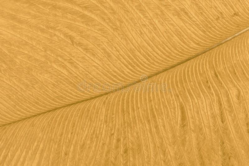 Tekstura złoty strusia piórka zbliżenie abstrakcyjny t?o zdjęcie royalty free