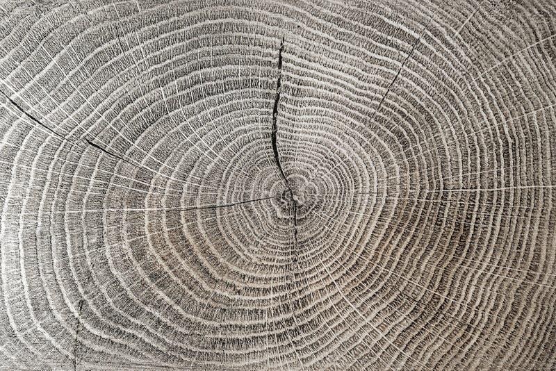 Tekstura z pierścieniami drzewa kółka i pęknięcia obrazy royalty free