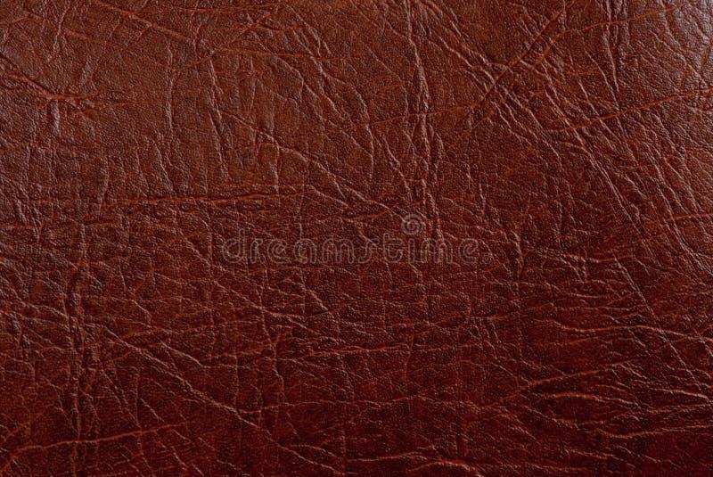 tekstura zbliżenia skóry tekstura obraz royalty free