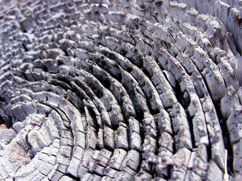 Download Tekstury drewna obraz stock. Obraz złożonej z drewno, tło - 37345