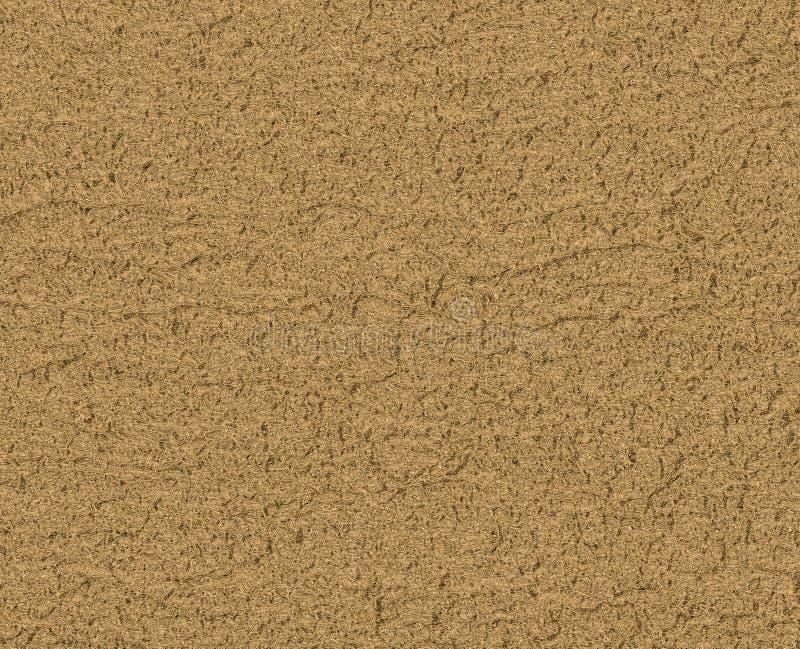Tekstury drzewo Tło tekstury dla projekta obraz royalty free