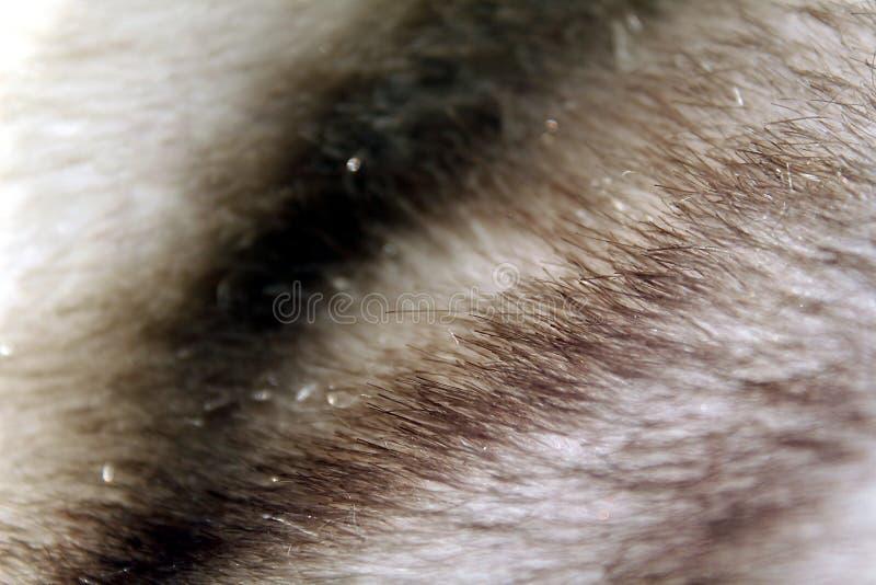Tekstury dzikiego zwierzęcia naturalny puszysty długi futerko fotografia stock
