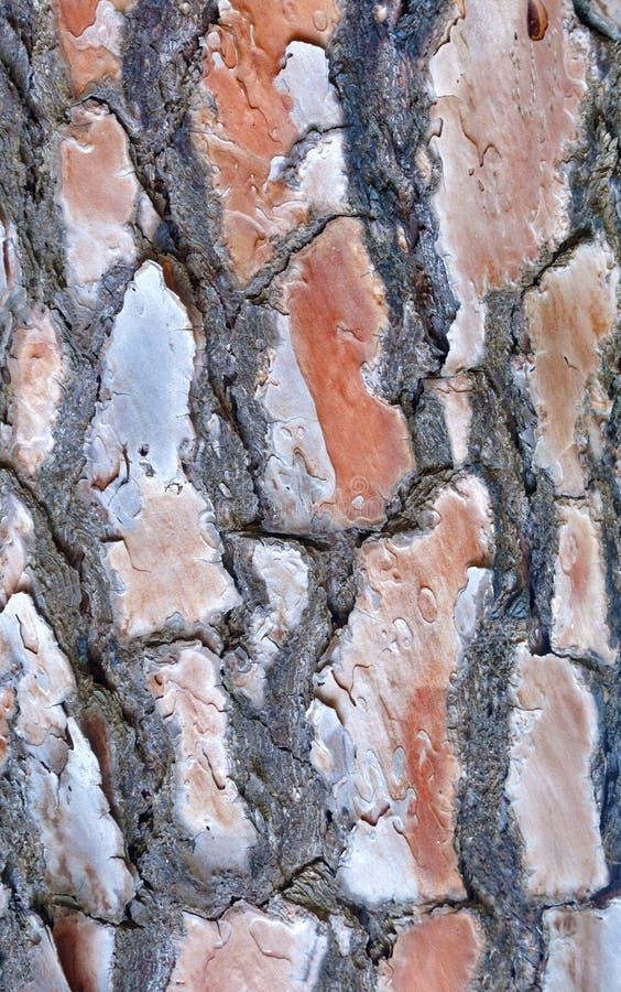 Download Tekstury Korowaty Stary Topolowy Drzewo Zdjęcie Stock - Obraz złożonej z wzory, drzewo: 42525016
