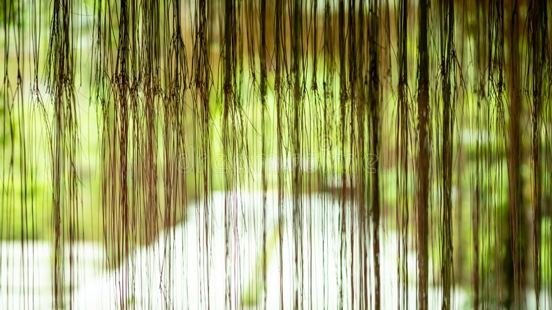 Tekstury korzeniowy okno, drewniany ścierwa tło zdjęcia stock
